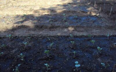 Projeto Embondeiro   Firmar raízes para futuro