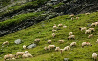 «Eram como ovelhas sem pastor»