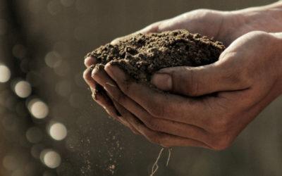 Dia Mundial dos Pobres; XVC – Estender a mão